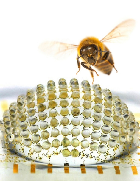 Bug's-eye camera and bee  Credit: University of Illinois and Beckman InstituteA new digital camera developed by scientists takes its inspiration from the compound eyes of insects.