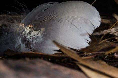 Feather2